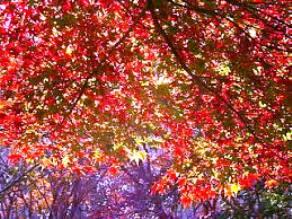 日本有数の紅葉の名所【滝頭公園】をご紹介