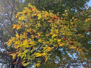 キャンプ場の紅葉も見頃が近づいています!