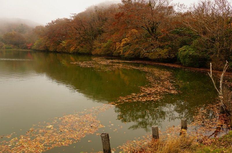 【実施予定バスツアー】天城原生林と八丁池ガイドウォーク