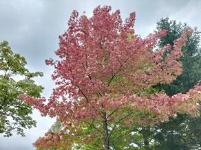秋風が優しく花々を揺らす秋、蒜山高原の紅葉も・・・