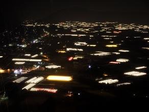 日本の夜景遺産「電照菊」