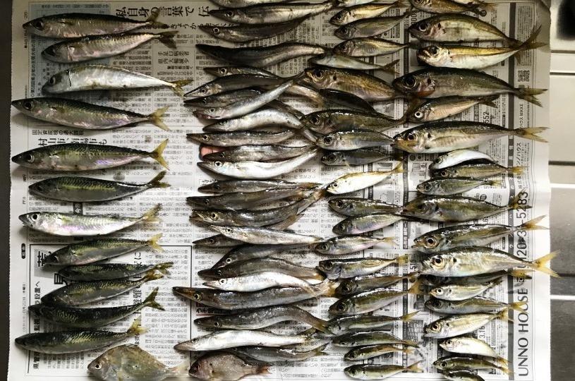 釣り ブログ 庄内